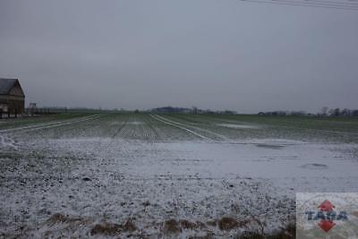 Grunt rolny, II i III kl. koło Żnina
